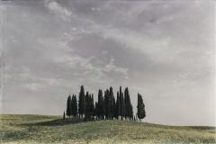 Tuscany Grove, landscape near San Quirico d'Orcia
