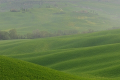 Waves in the field, Val d'Orcia
