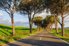 Country road in Val d'Orcia