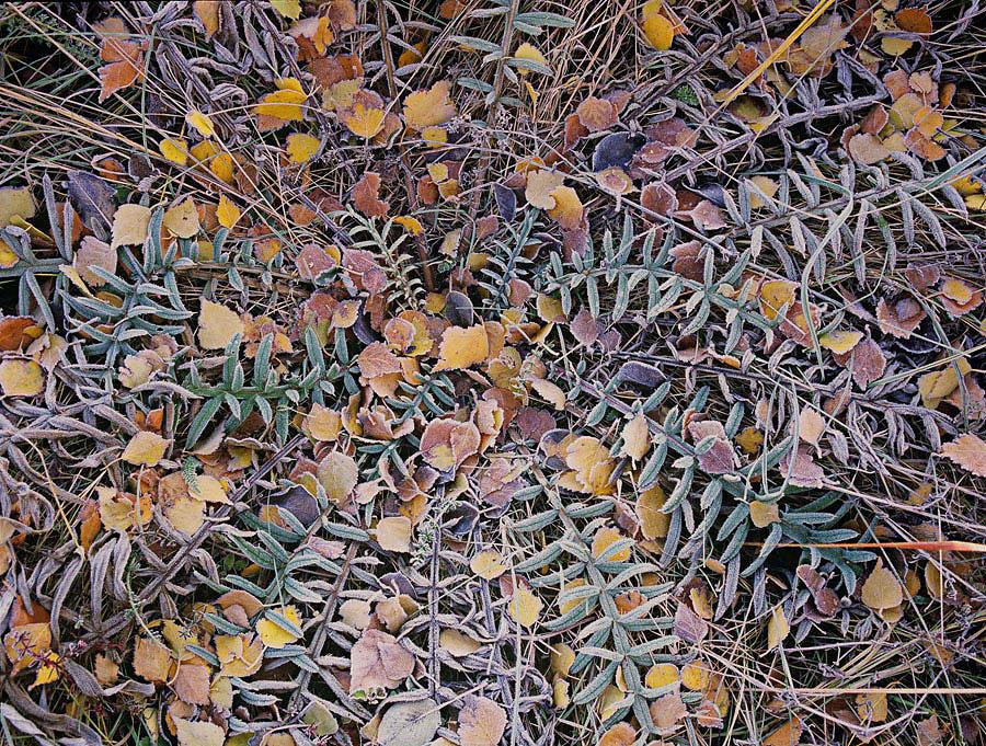 Close Up Autumn Landscape
