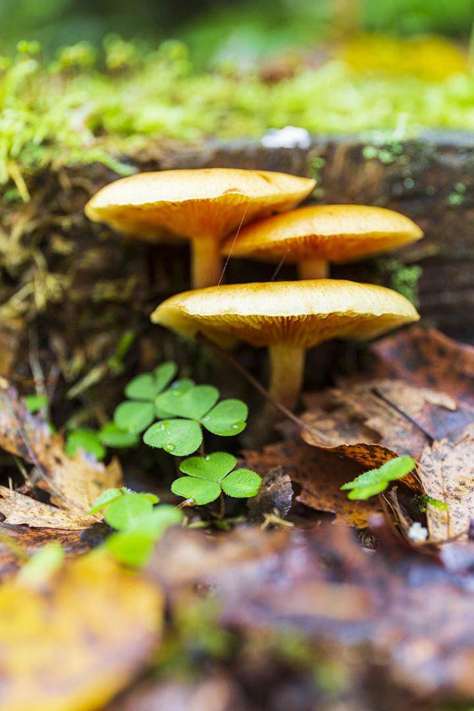 Autumn Photography. Mushrooms