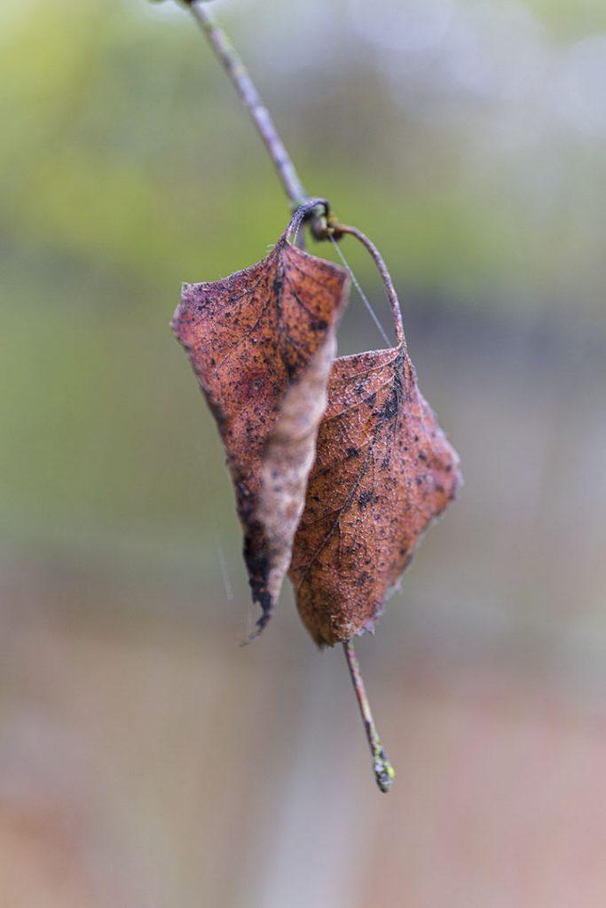Autumn Photography. The last leaf