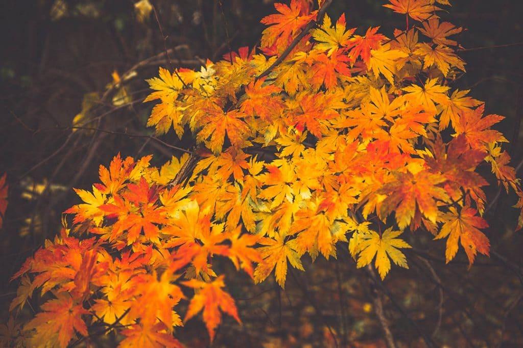 Autumn Photography_3