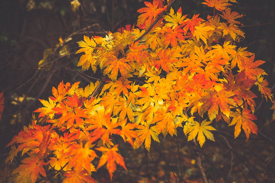 Autumn Presets_3 Before and After